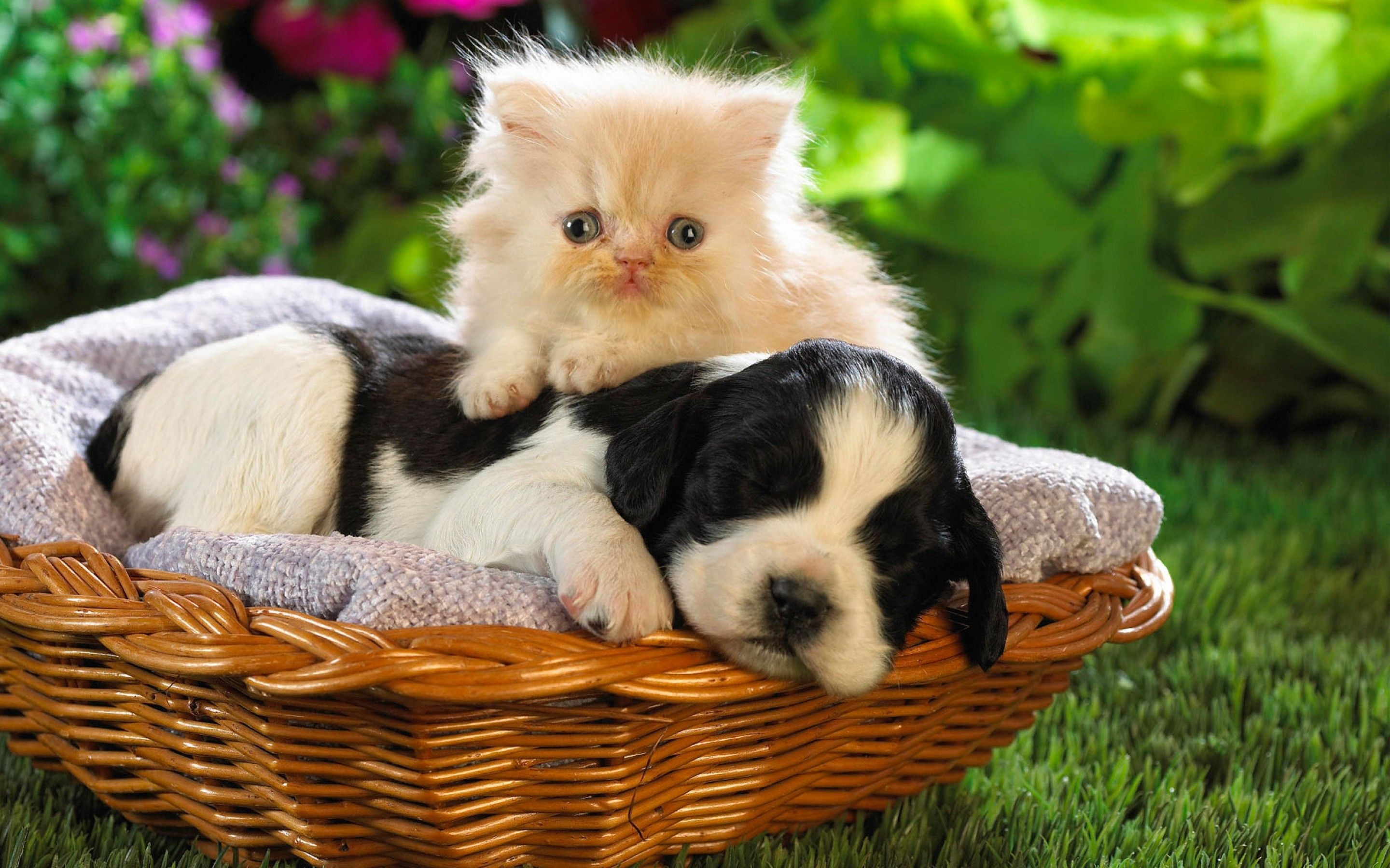 Puppies And Kittens Cute Puppies And Kittens Pictures All