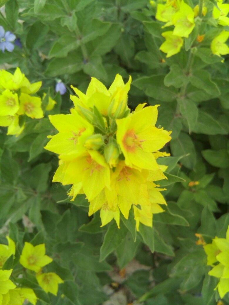 Пин от пользователя Silvandrei88 Krauze на доске цветы