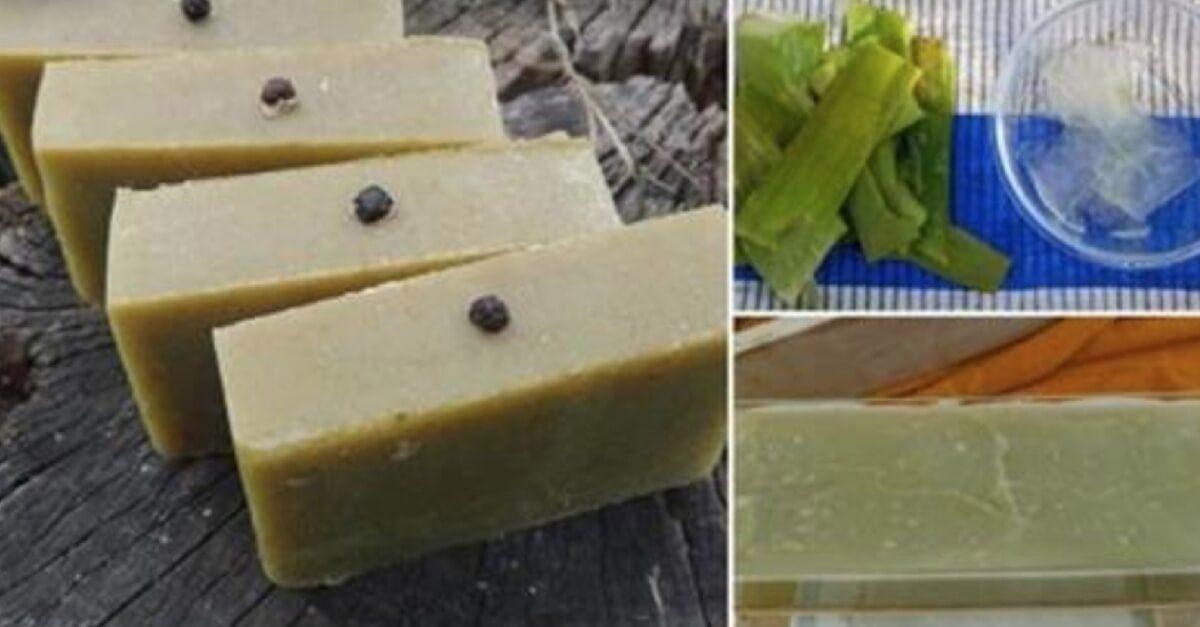 Veja como fazer um maravilhoso sabonete de babosa caseiro!