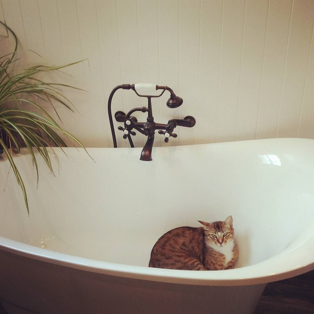 #Caturday bath kitty . . . #mustardsplatterdesign #graphicdesign #designer #marketing #socialmedia #creative #projectmanager #professional #digitaldesign #consultant #entrepeneur #smallbusiness #ladyboss #pleasanthill #walnutcreek #lafayette #danville #martinez #concord #mountdiablo #alameda #sanfrancisco #bayarea #norcal #california