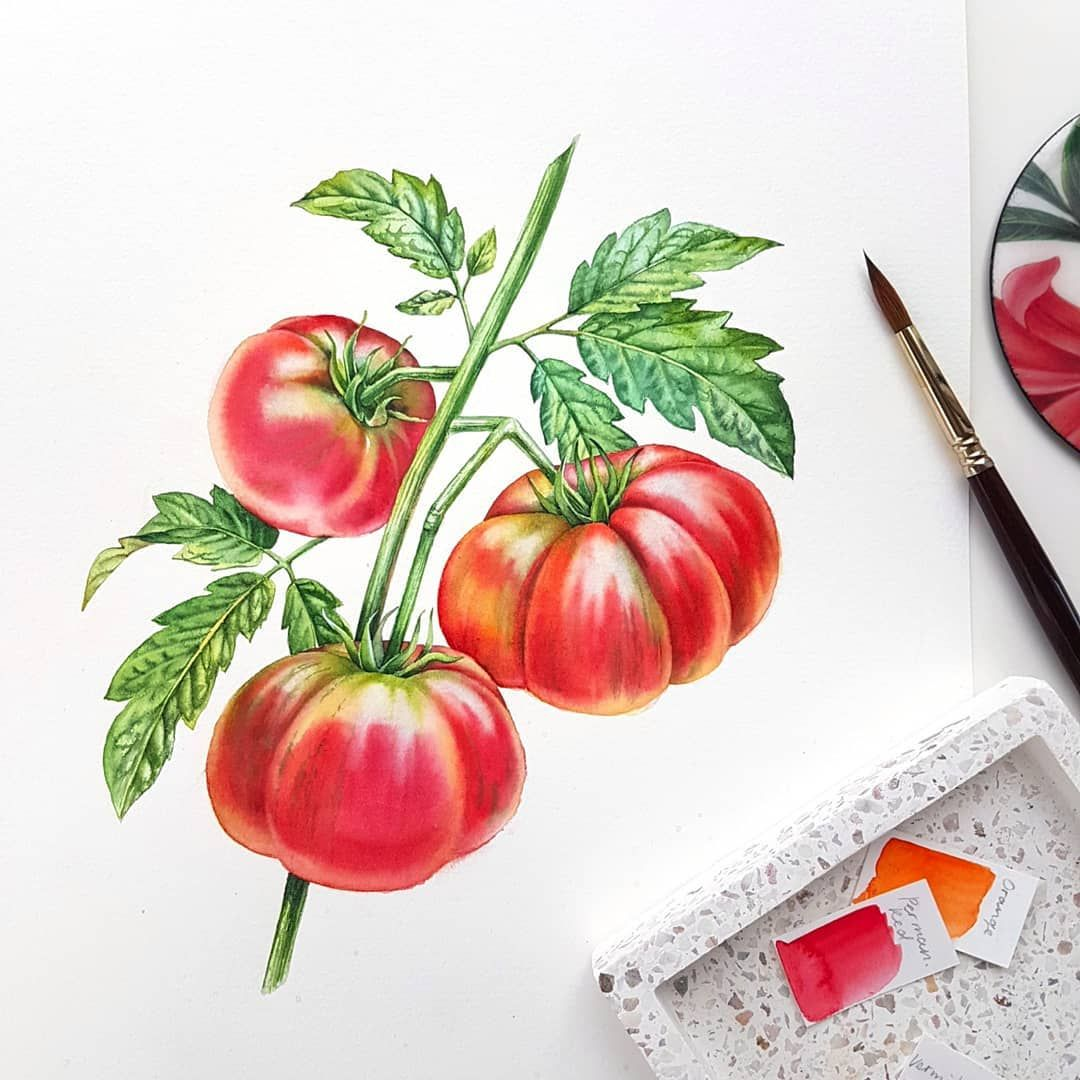 Black Krim Tomatoes In This Project Every Plant Is 400 x 300