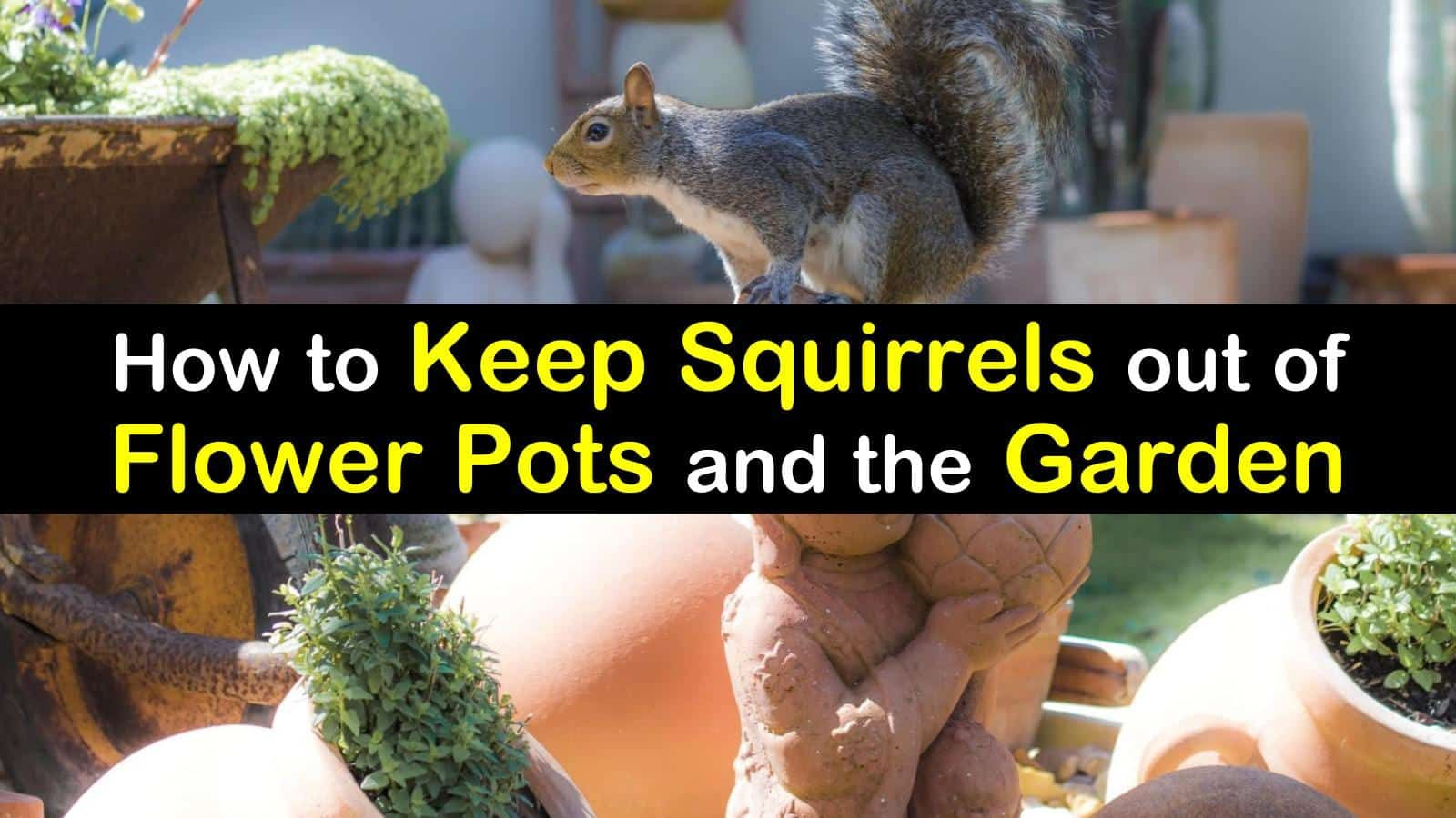 How to Keep Squirrels out of Flower Pots and the Garden