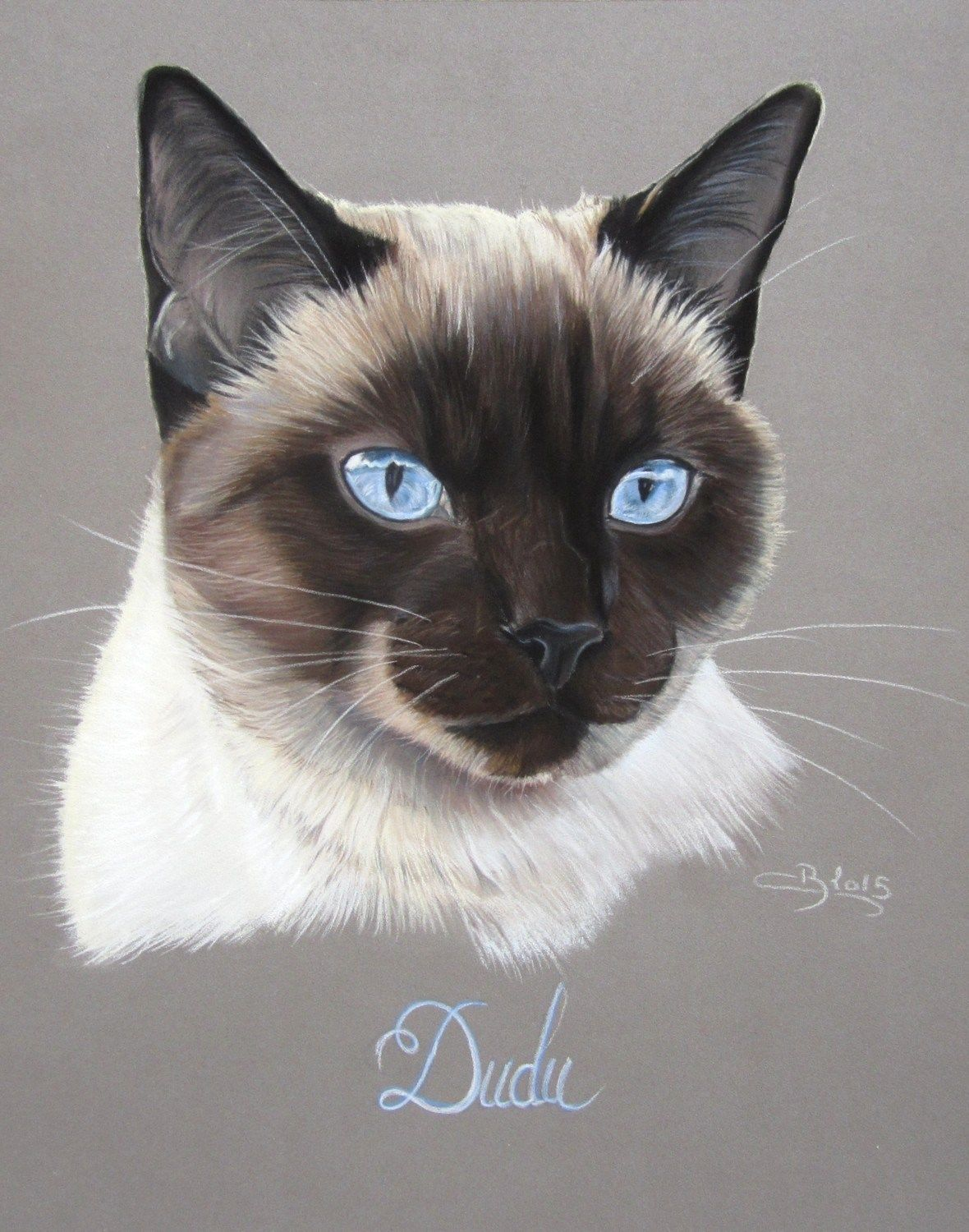 Portrait De Chat Siamois Pastels Secs Feline Animal Drawings
