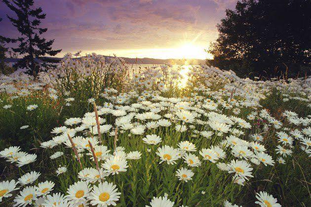 Wonderful Spring Landscapes Spring Landscape Photography Spring Landscape Photos Spring Landscape