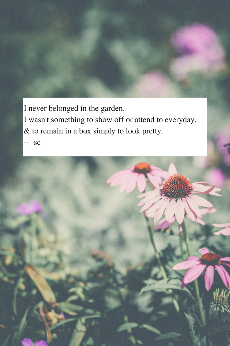 Quotes From Rosepetalednightmaressunflowerdreams Poetry About Our Wildflower Spirits Wild Flower Quotes Wild Child Quotes Flower Quotes