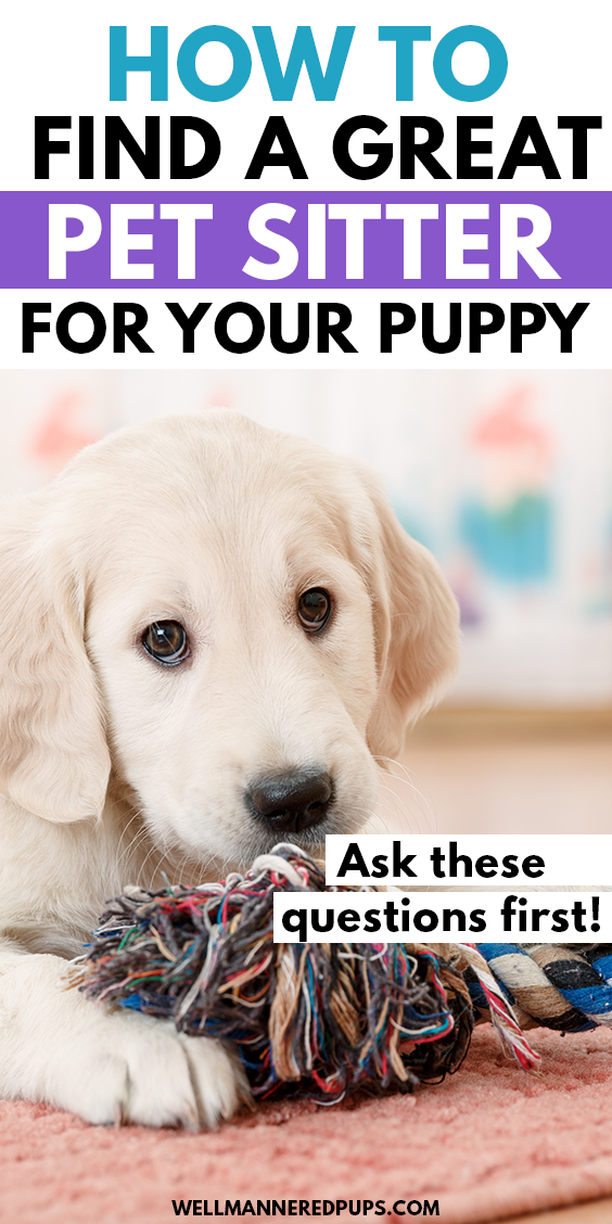 How To Find A Great Pet Sitter For Your Dog In 2020 Pet Sitters Sitter Puppy Care
