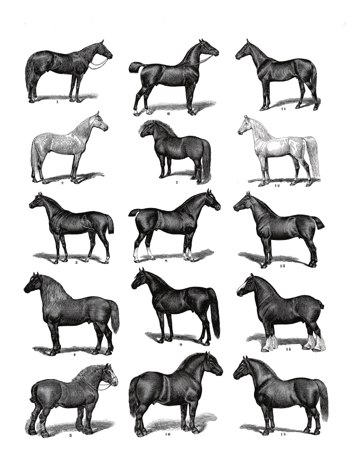 free to use horse clip art - for inspirational purposes - horses graphicsfairy.pdf