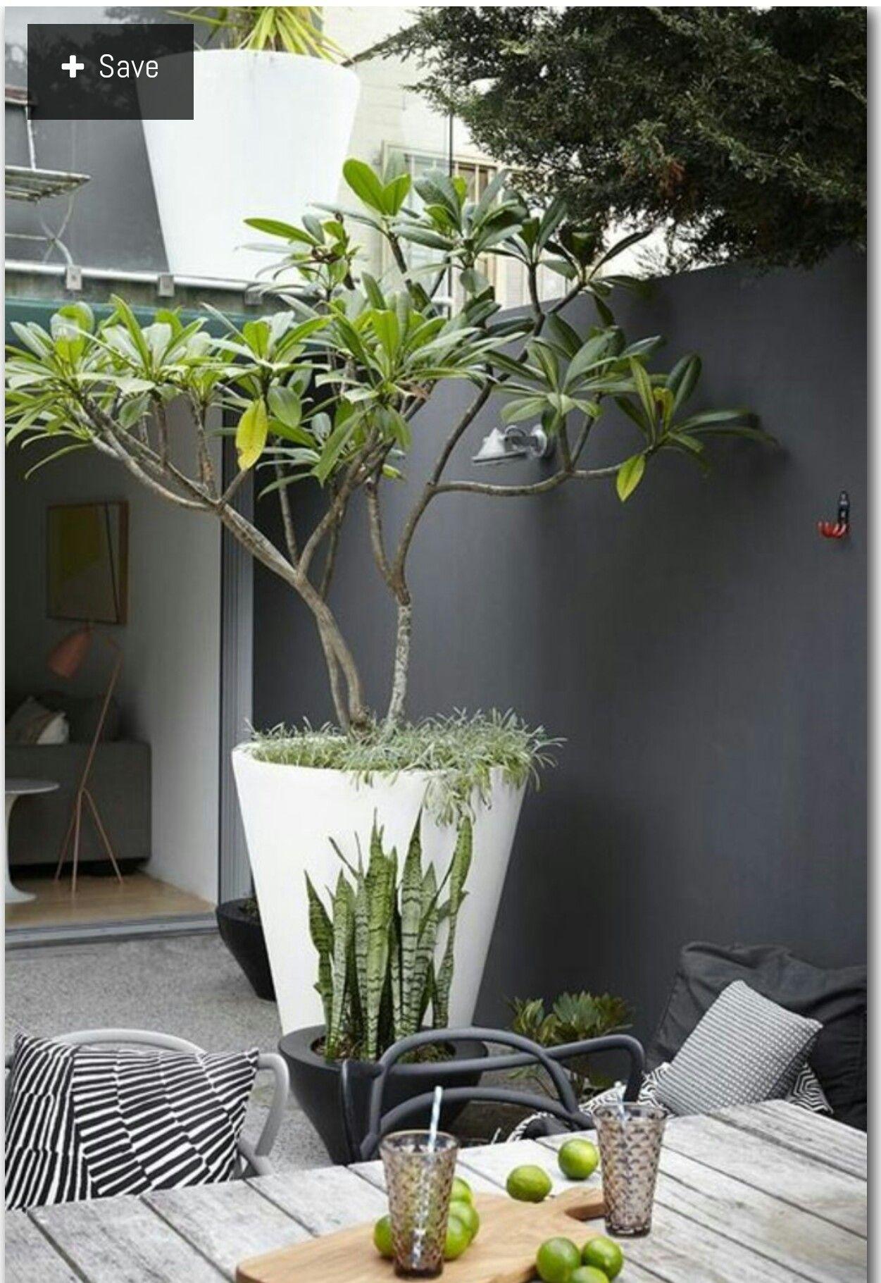 24eddeb07b77f83c1308d8b786ff5819 Frais De Decoration Jardin Zen Exterieur Des Idées