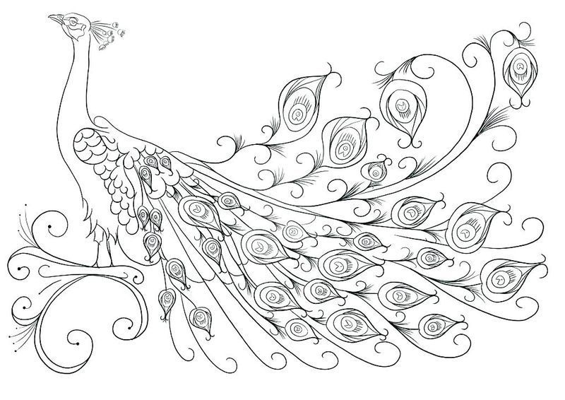Three Hens And A Peacock Coloring Pages Free Coloring Sheets Peacock Coloring Pages Star Coloring Pages Animal Coloring Pages