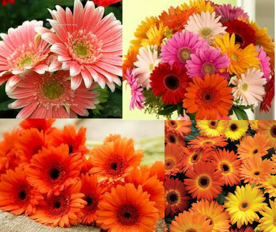 We Itself Doing Farming Of Carnation And Other Different Varieties Of Flower We Deliver Online Fresh Carnation Flow Wholesale Flowers Carnation Flower Flowers