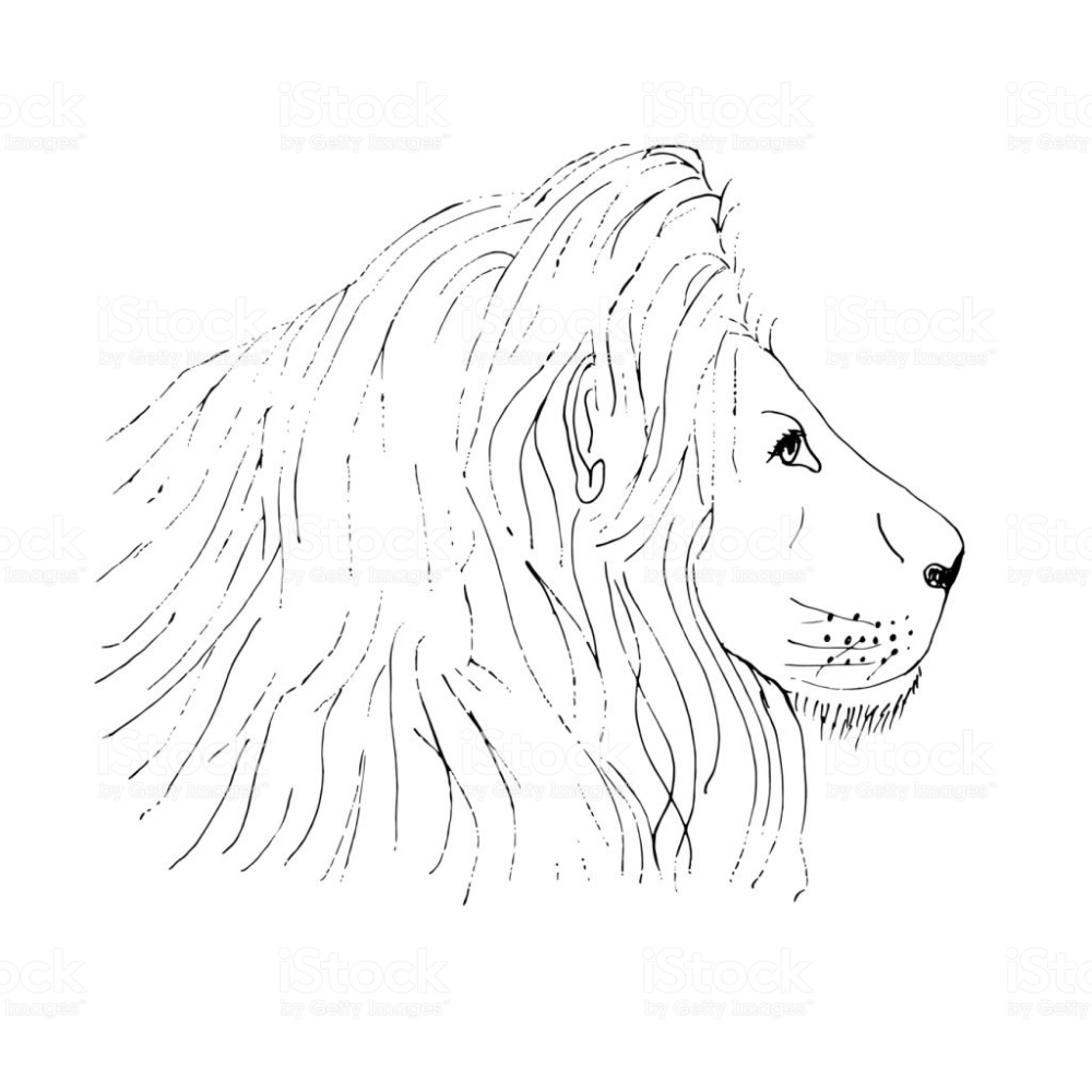 lion male head ink hand drawn sketch on white background
