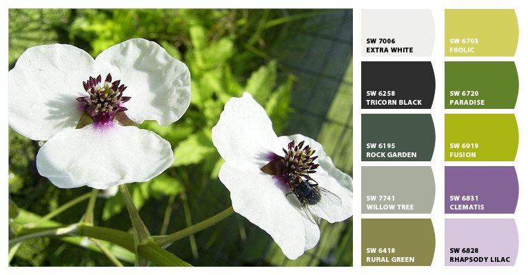 Katniss Plant Sagittaria Sagittifolia Plants Katniss White