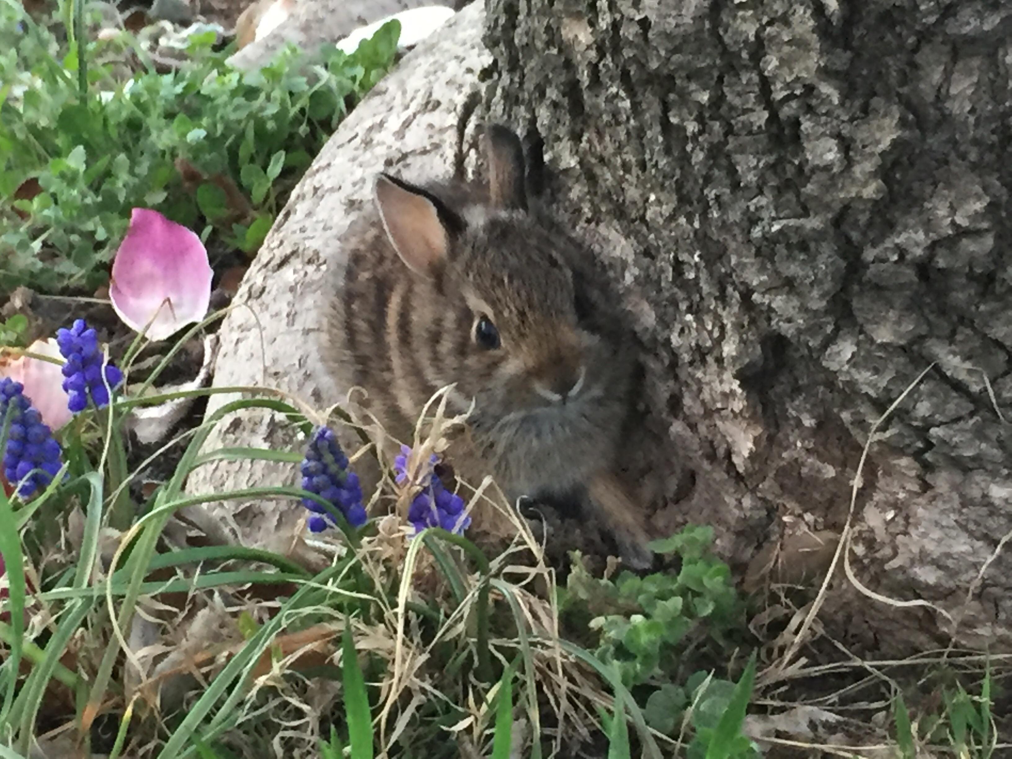 Little baby bunny in my yard https://ift.tt/2IRIVUF | Baby ...