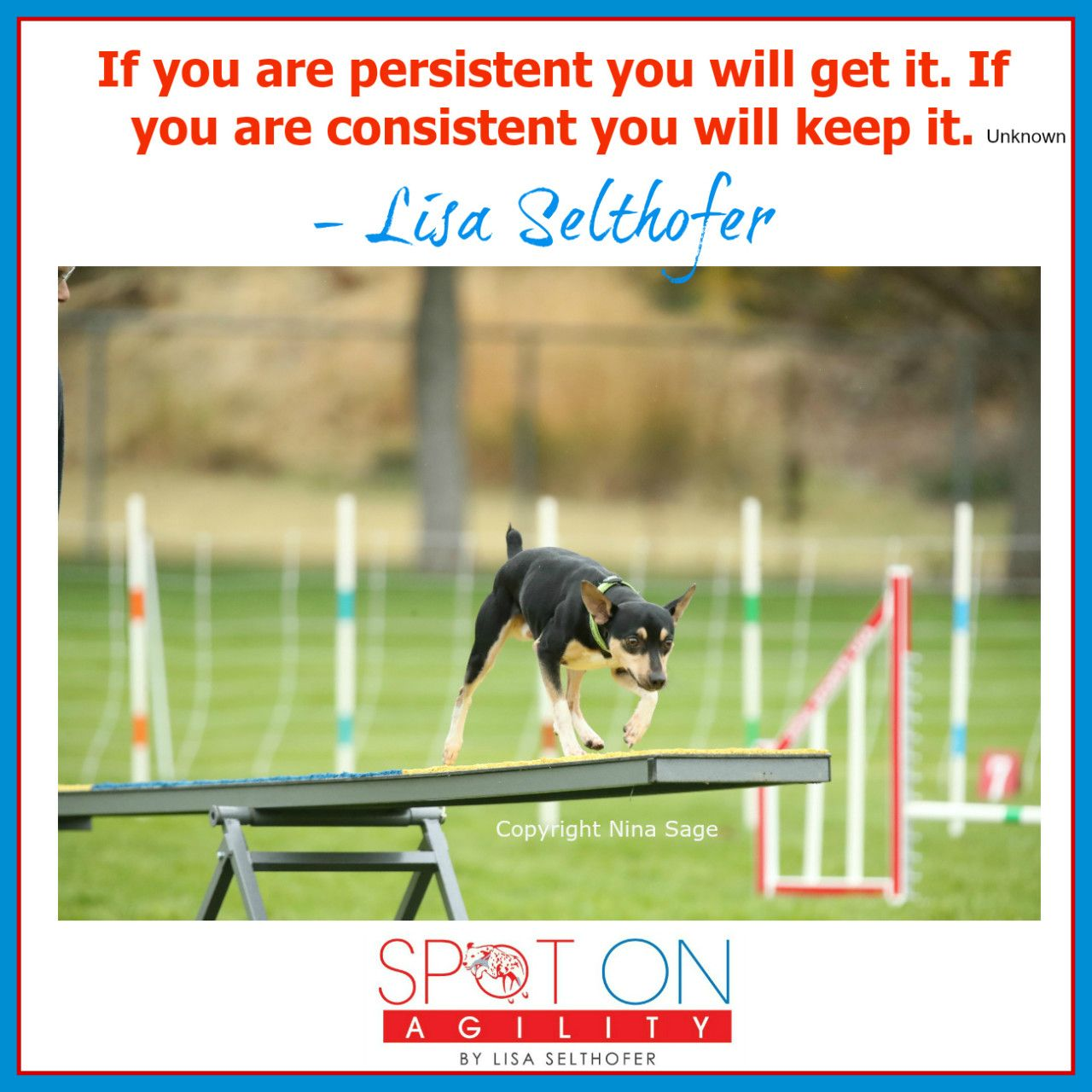 Be Persistent And Consistent Agility Training For Dogs