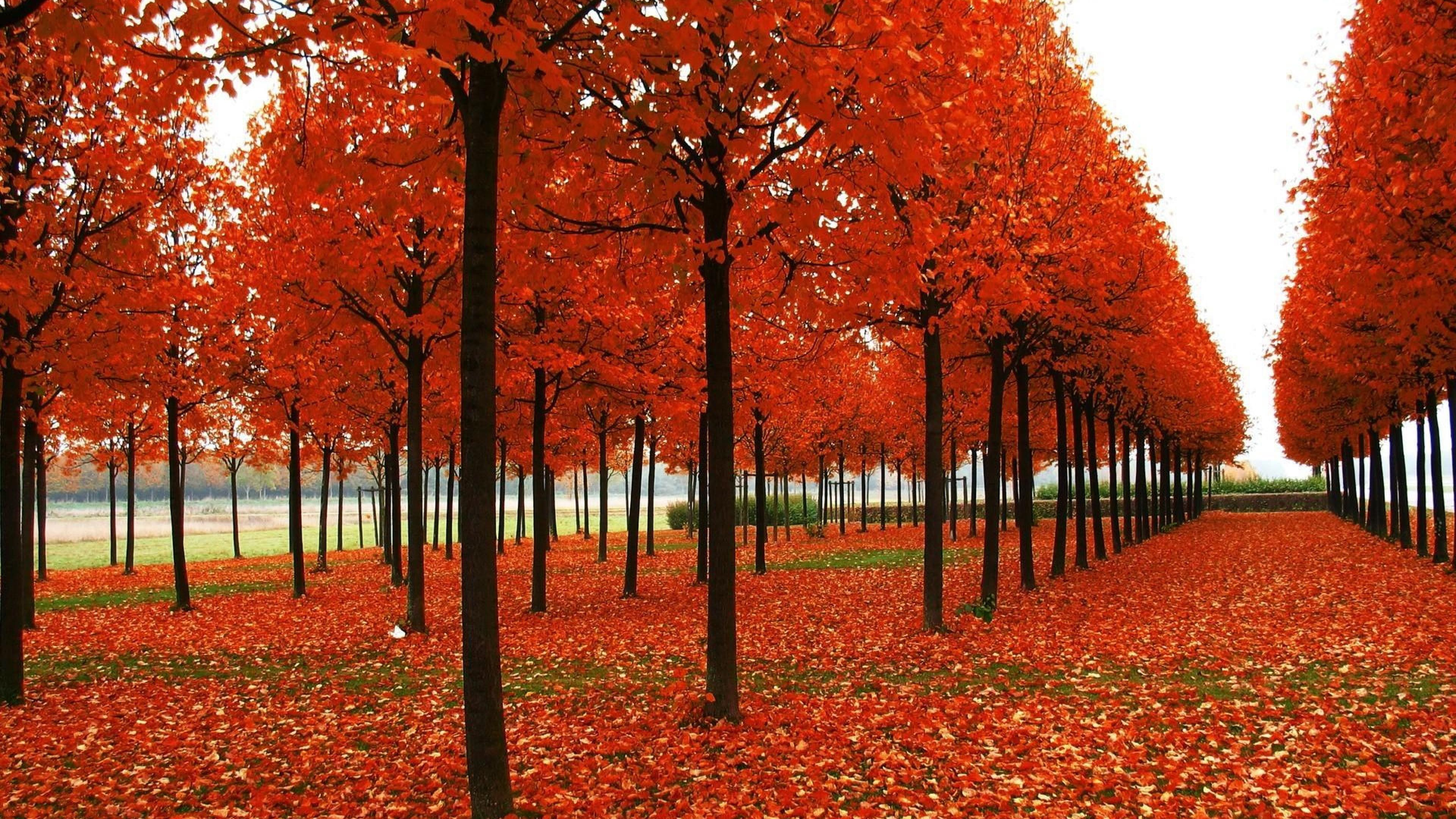 Download Wallpaper Horse Autumn - 24f046c9d6e7bf859636b535d28400eb  Picture_135785.jpg