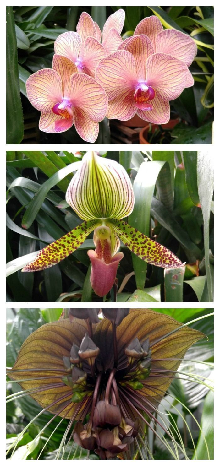 These orchid pictures show how diverse the species can be from a