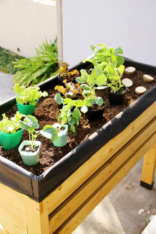 木箱な畑 ベジトラグ がやってきた 土の充填 植え付け編 家庭