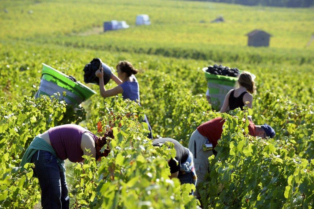 Fête des Vendanges (Annual Grape Harvest), France