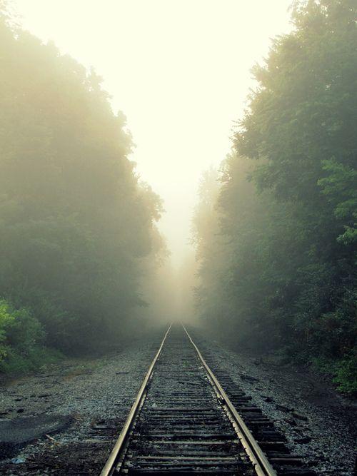 Leave only tracks (by Sarah Elizabeth Simpson)
