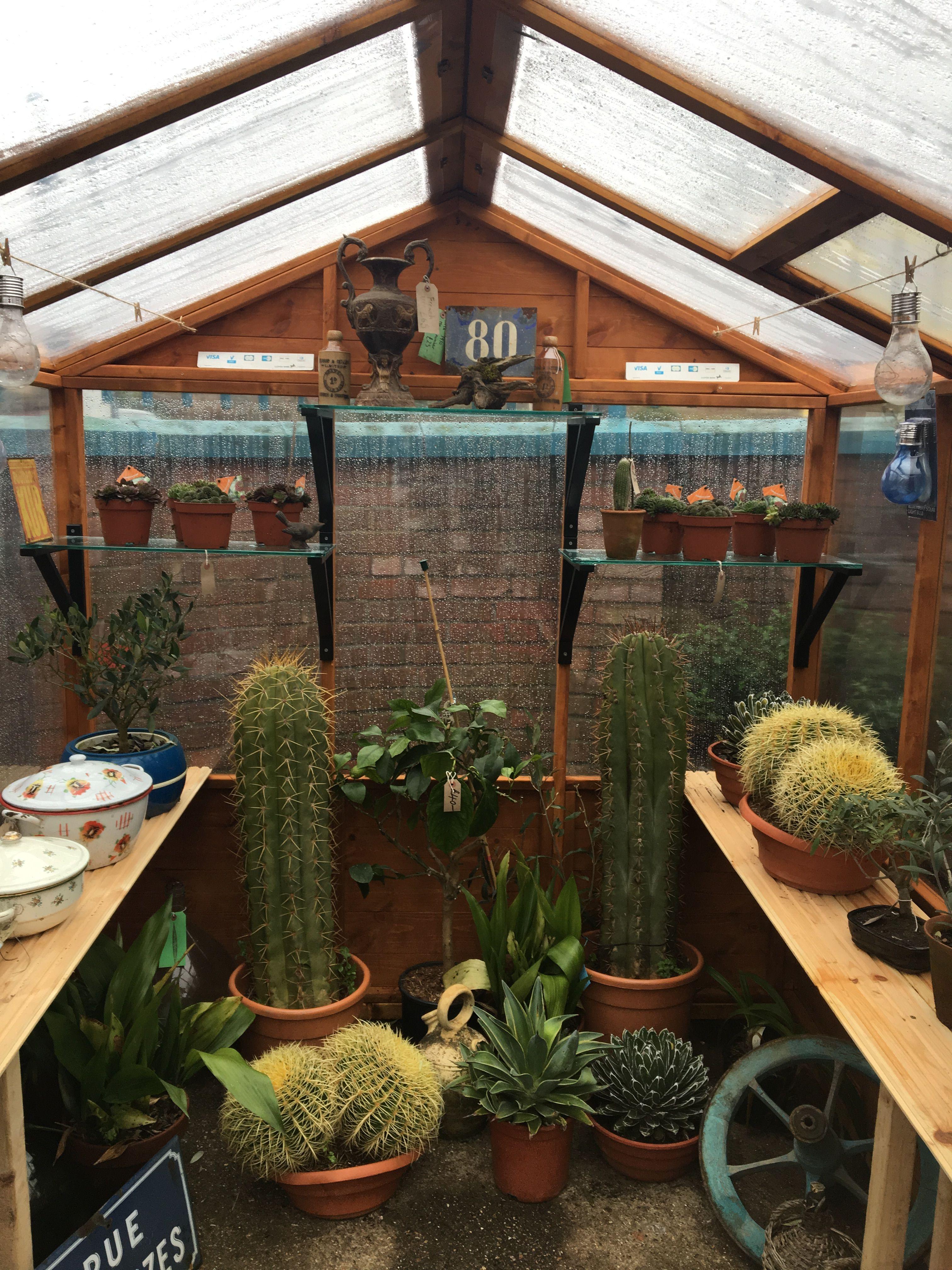 Prickly beasts! Olive garden delivery, Indoor gardening