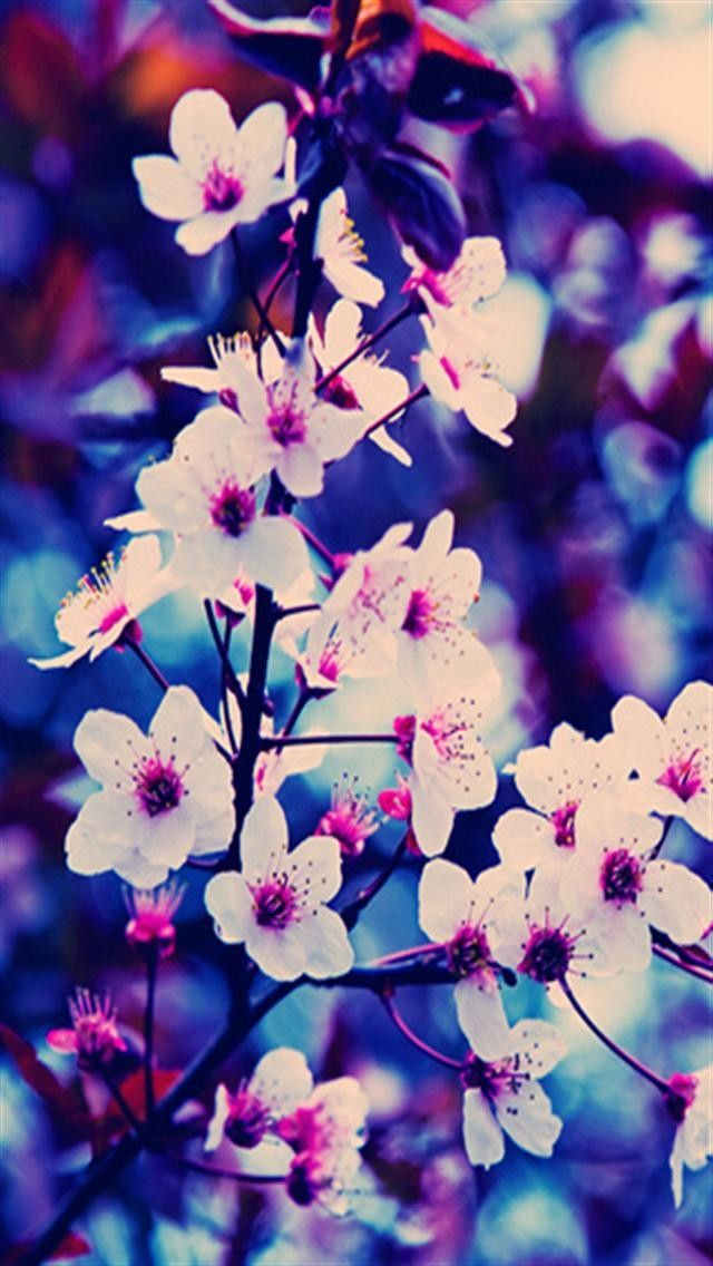 4k Hd Wallpaper Cherry Blossom Pink Spring Flowers Oboi Na