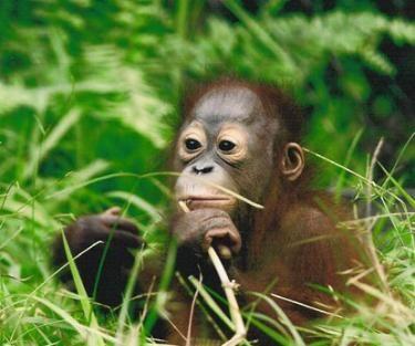 Jackson Zoo Coupons Discounts Deals Specials Mississippi 2013