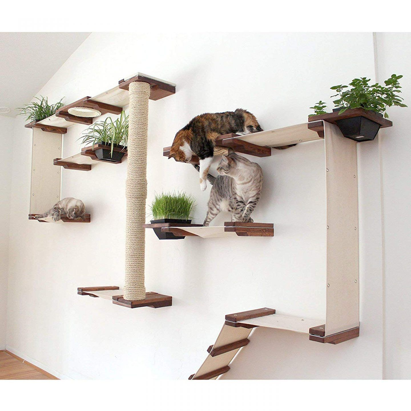 the best cat wall shelves of 2020 and why you need them on wall shelf id=74581