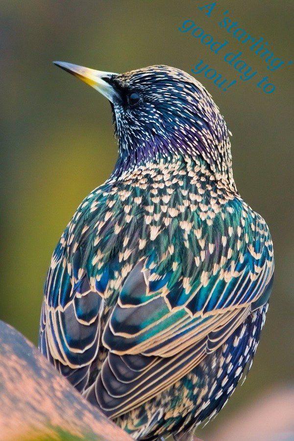 Upotettu Kuva Villielaimet Elainkuvat Varikkaat Linnut