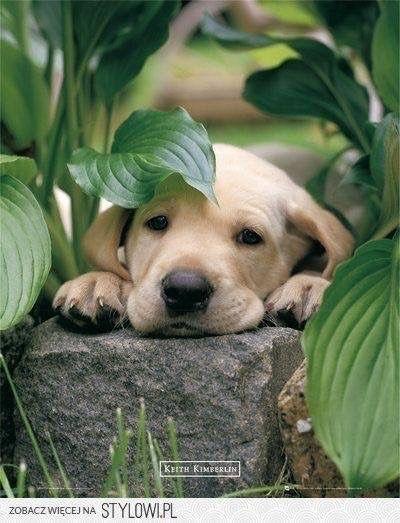 Hello There Neighbor Tiere Hunde Hunde Welpen