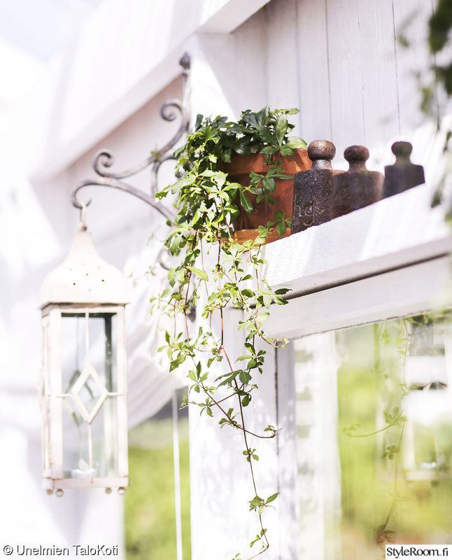 hylly,kasvi,piha,terassi,muratti