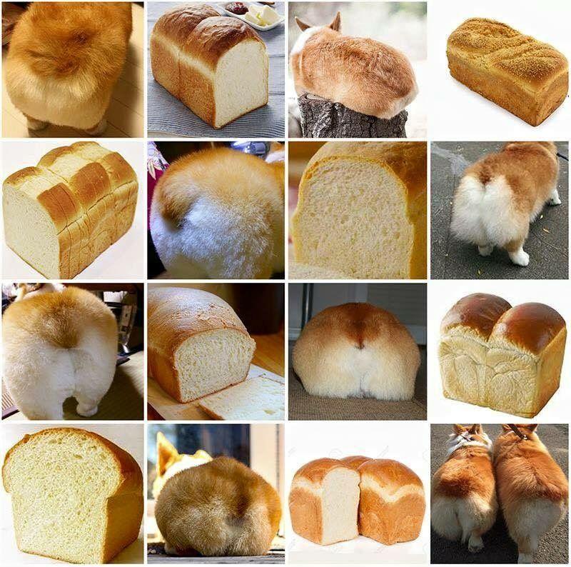 Loaf Of Bread Or Loaf Of Corgi Haha Corgi Funny Funny Dog