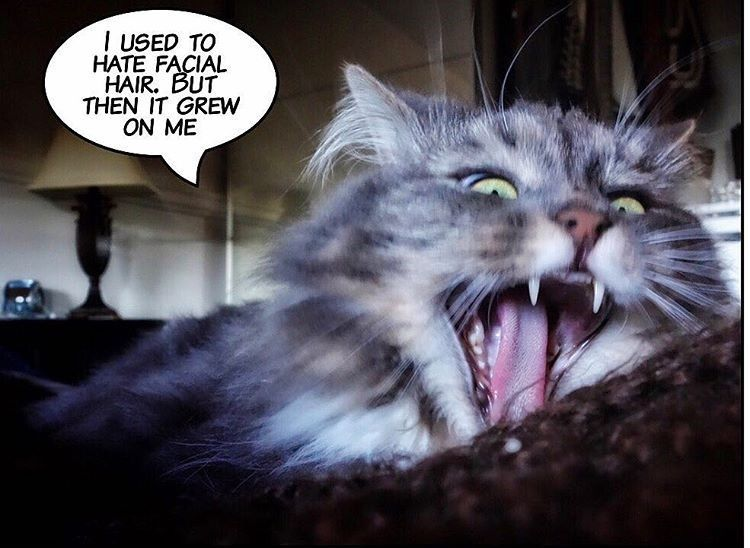 Bad Joke Cat