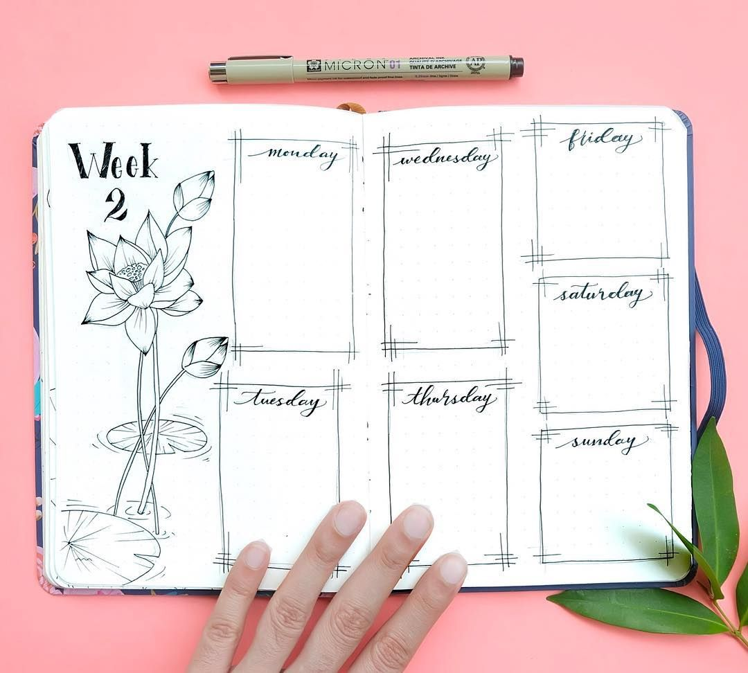 Bullet journal weekly layout, Lily drawing, lily pad drawing