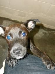 Dogs For Adoption In Tarboro Nc