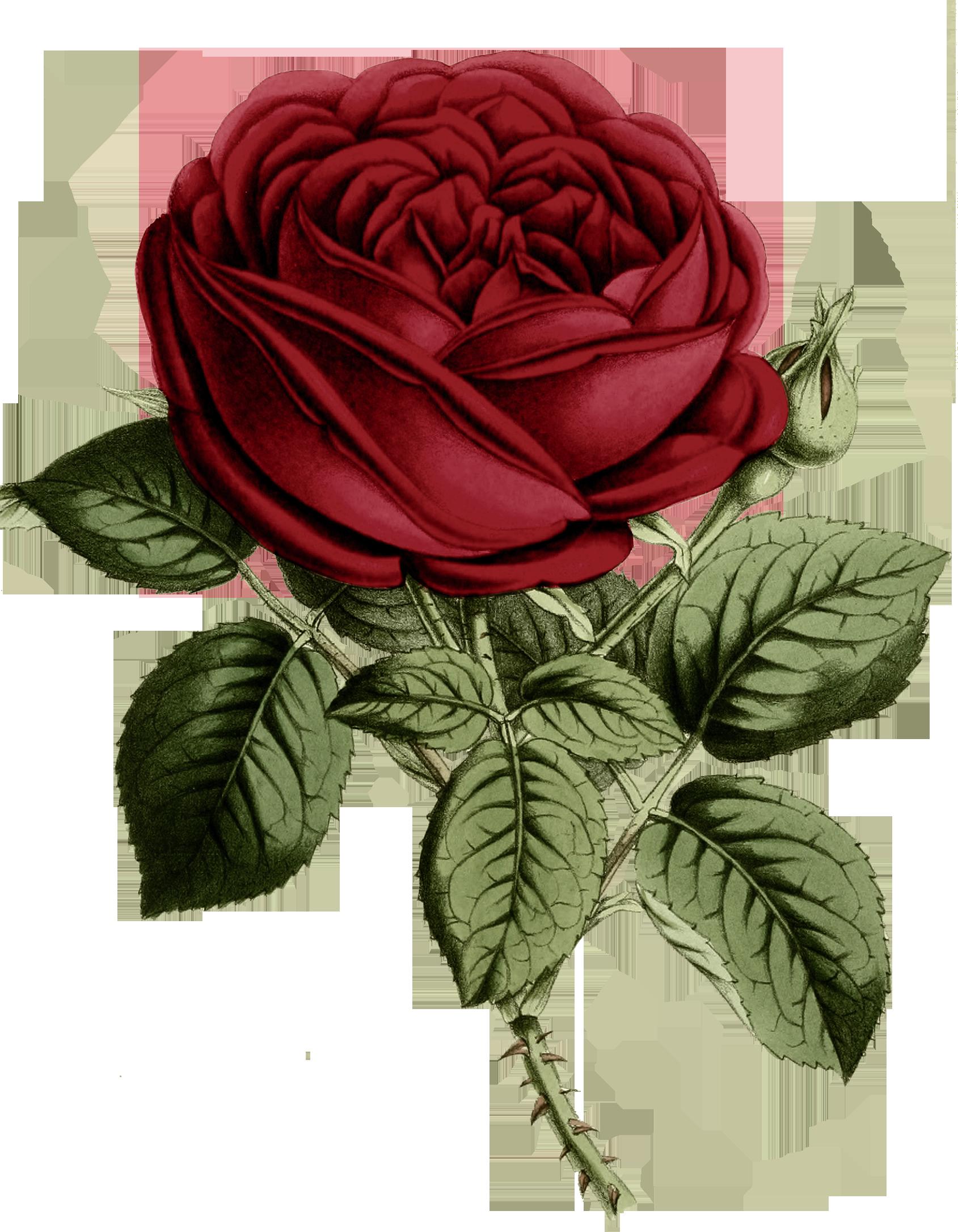 роза на белом фоне картинки мультяшные упала обрушилась
