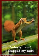 Find great deals for Funny Squirrel Dropped Nuts Refrigerator / Tool Box Magnet Ad . Shop with confidence on eBay!
