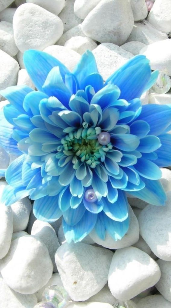 Blue flower and pearls Amazing ✈ World Pinterest Blue flowers - blue flower backgrounds