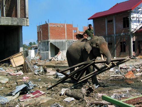 Nützliche Elefanten bei der Unterstützung, um die Trümmer zu entfernen.