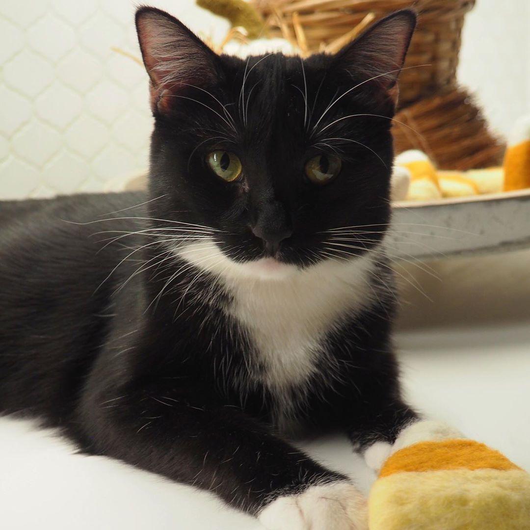 Scanner Near Me >> Cat 4 Scanner Catart Iamscatfood Cat D Cat Prison Near Me