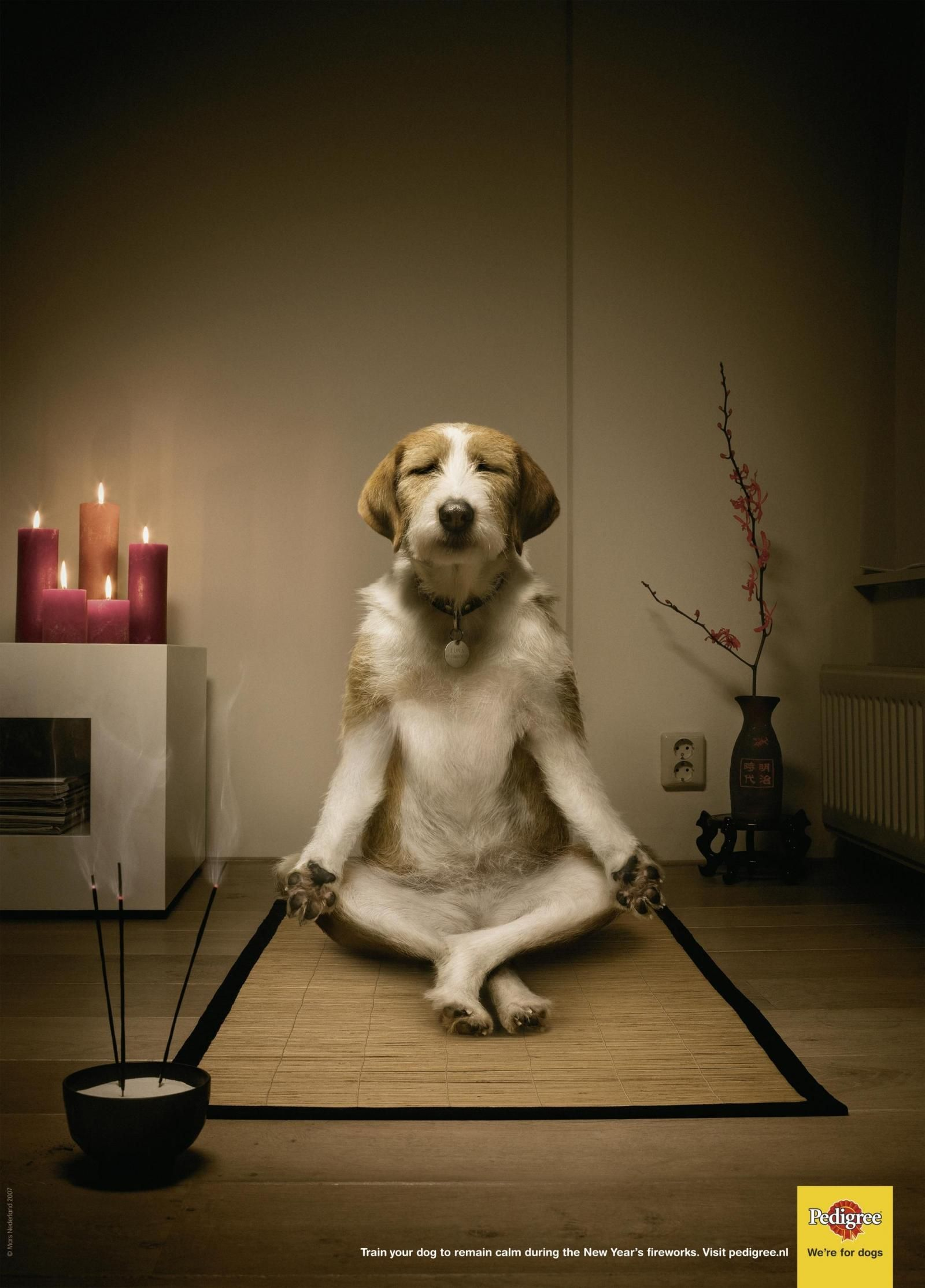Pedigree Meditating Advert Animals Zen Dog Dog Yoga