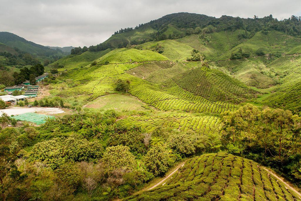 Cameron Highlands 2016 Malasya y Malasia