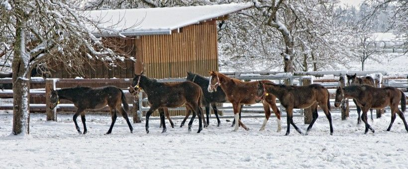 Turning your horse out in the winter - IrongateIrongate