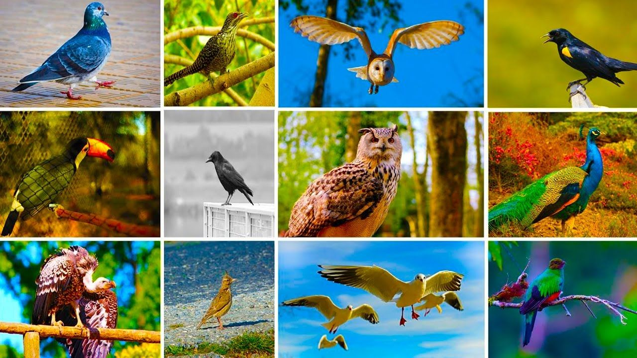 Birds Images With Name Hd | Imaganationface org