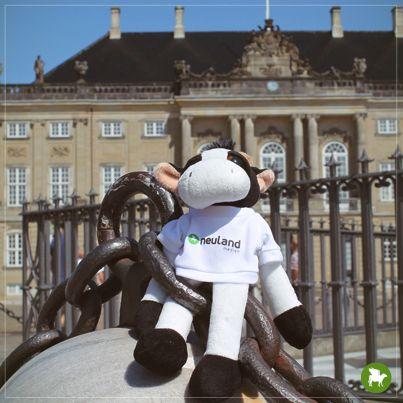 Und weiter geht die Reise... Gemeinsam mit meinem Kollegen Marvin bin ich nach Dänemark, genauer gesagt nach Kopenhagen, gereist. Wie immer, ein toller und aufregender Urlaub.