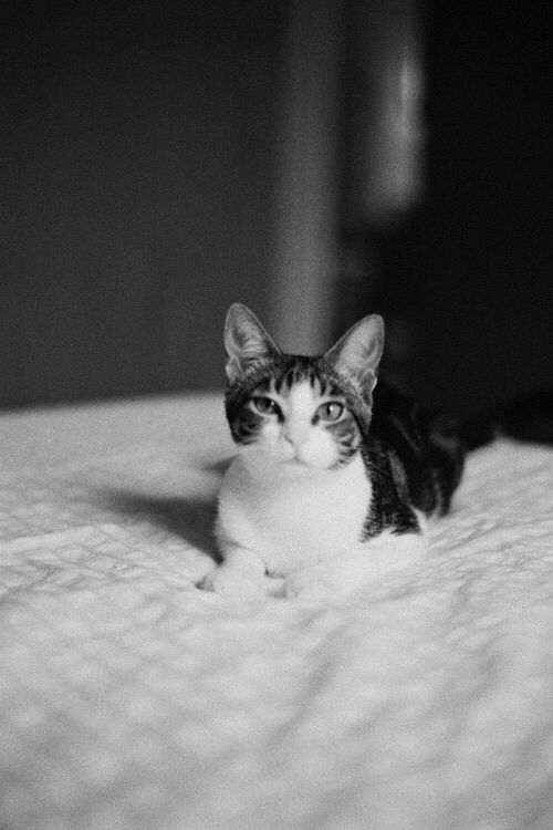 Pin By Sonia Russi On Cats Cute Animals Animals Kittens