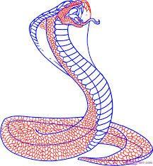 Resultado de imagem para drawing for snake