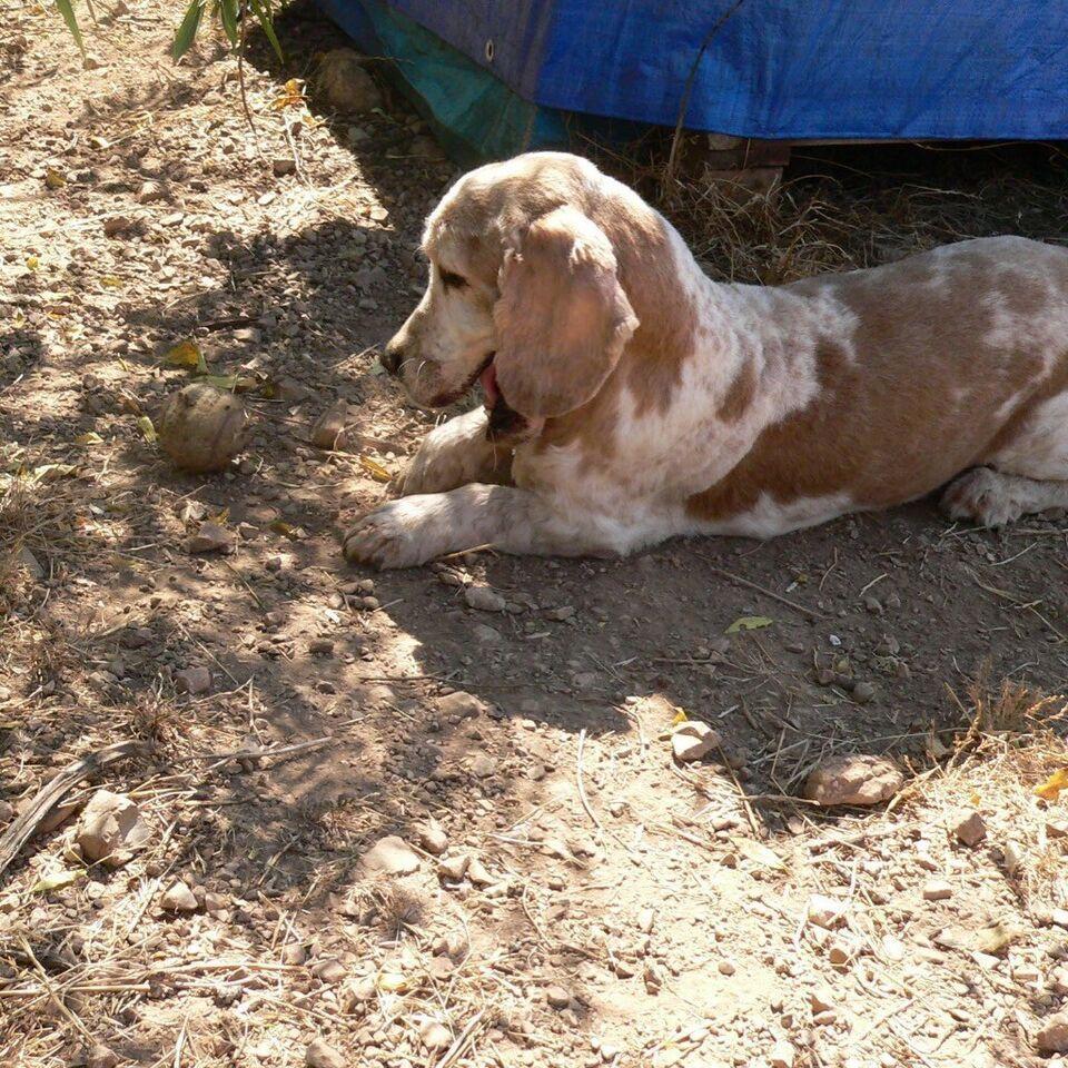Franzl lustiger Hundesenior sucht ein Zuhause in