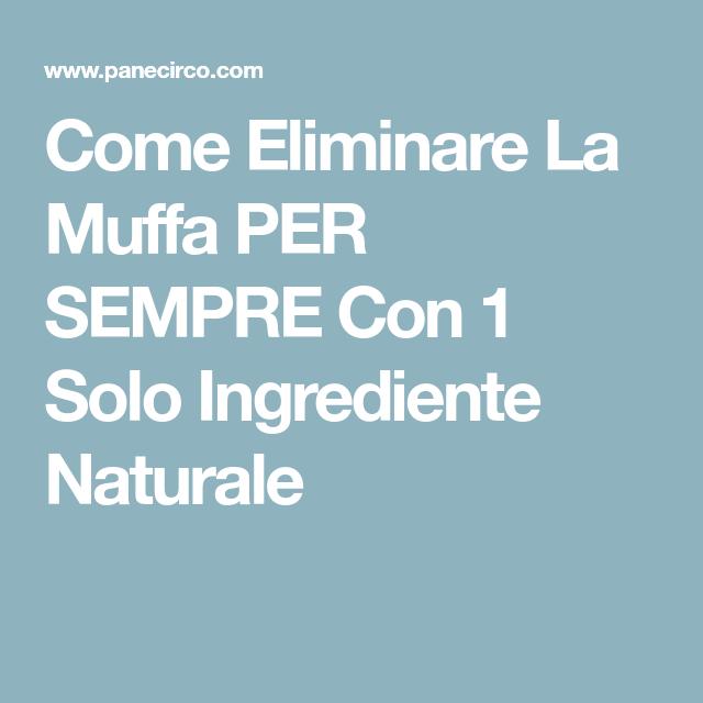 Come Eliminare La Muffa PER SEMPRE Con 1 Solo Ingrediente Naturale ...