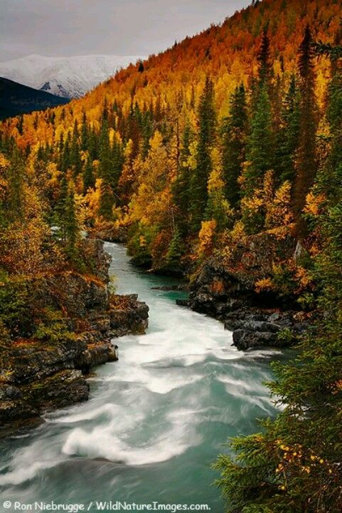 Gorgeous whitewater in autumn.