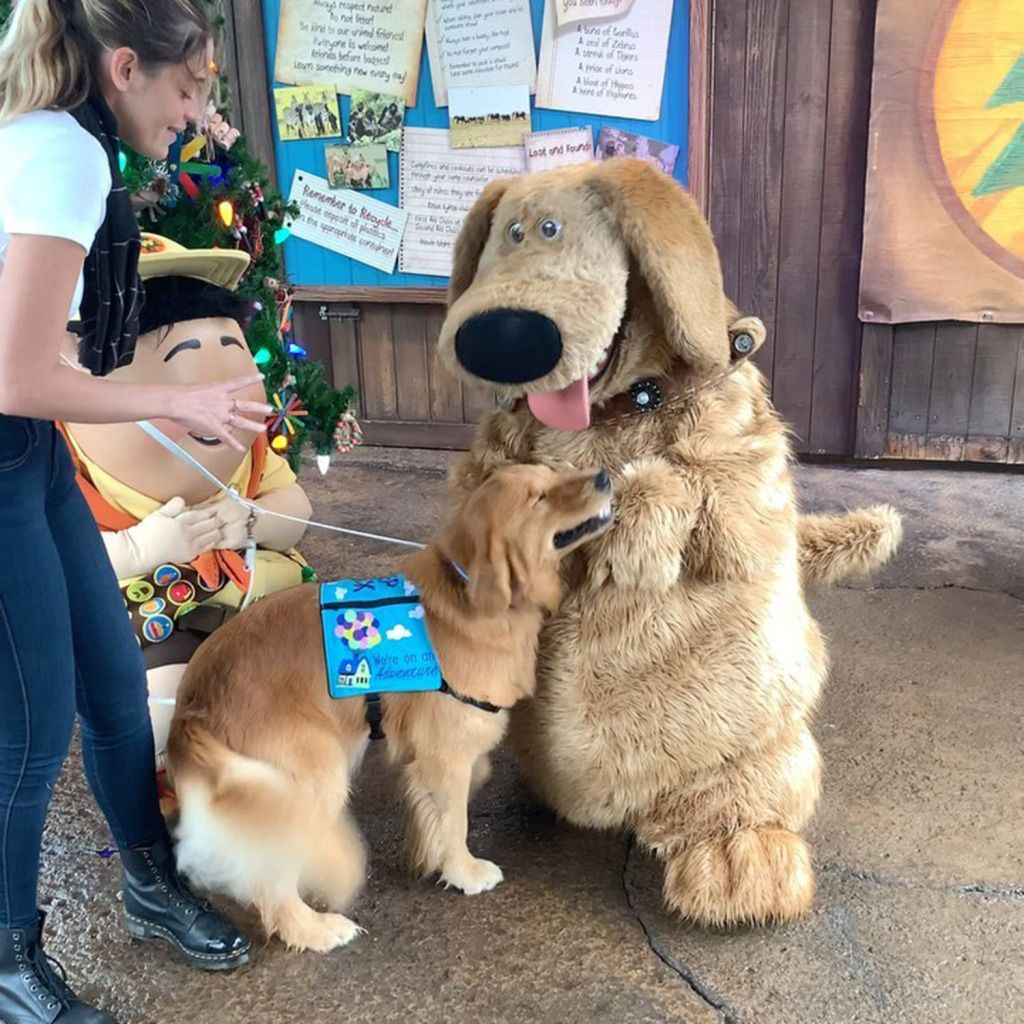 Service Dog Has Adorable Encounter with Dug from Up at